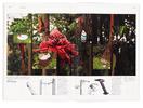 bamboo09-04.jpg - estúdio lógos design gráfico - julio mariutti